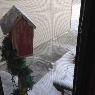 Birdhouse & sidewalk